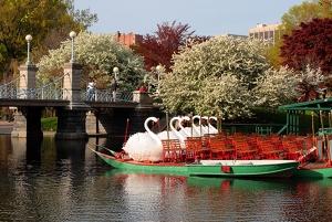 Swan-Boats