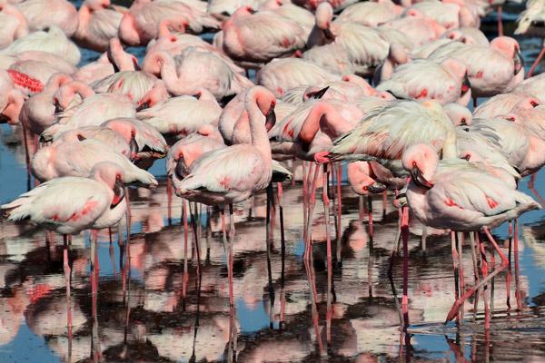 Walvis Bay, Namibia