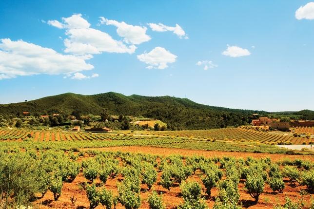 TS-100915923-Catalonia-vineyard