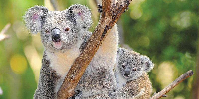AustralianAdventure