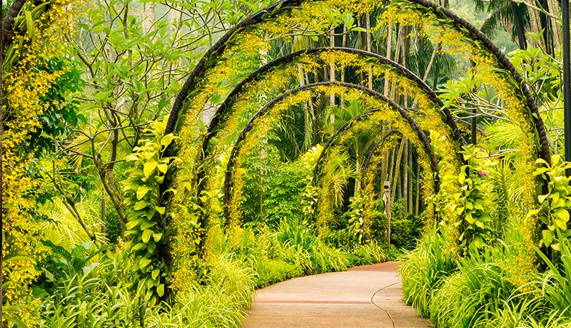 singapore_botanicalgardens