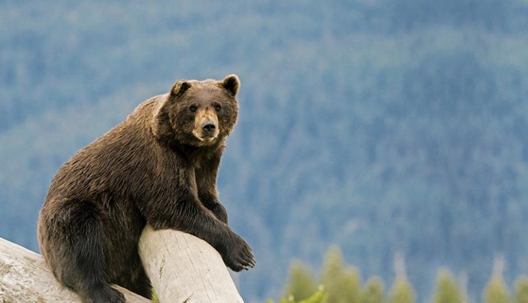 bear_blog