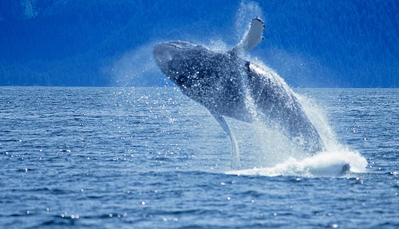 whale_blog