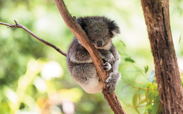 Australia_3-TorangaZoo