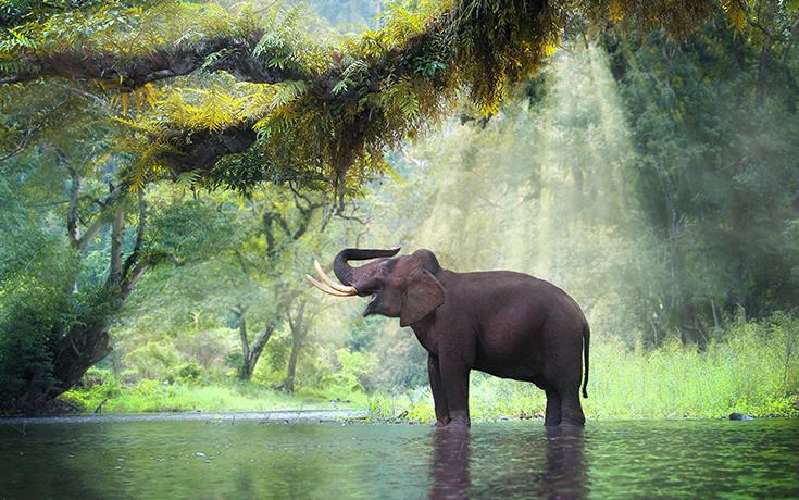 Austrialia3_elephantpark