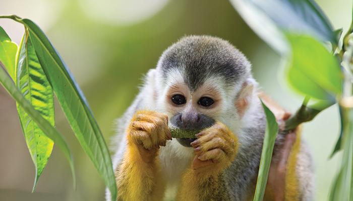 SouthAmerica_Monkey.jpg
