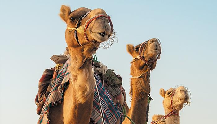 MajesticMiddleEast_Dubai2