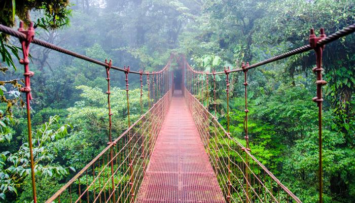 RainforestExtravaganza_DiscoverCostaRica.jpg